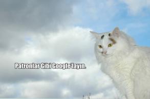Patronlar Gibi Googlelamanın Sırları